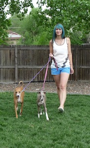 denver dog walking services pricing